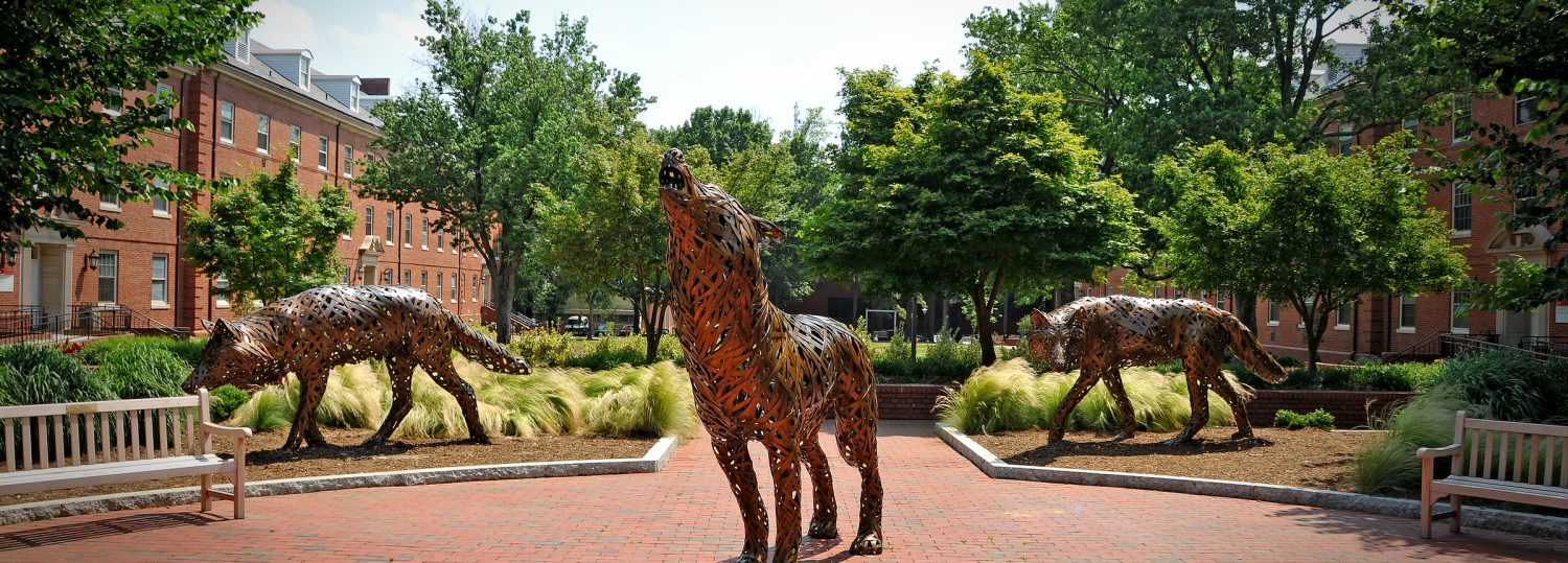 Copper wolves on central campus